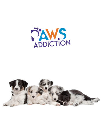 Paws Addiction